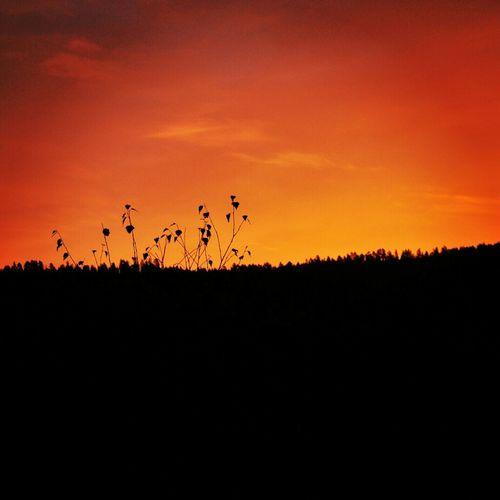 Sunset Naturen