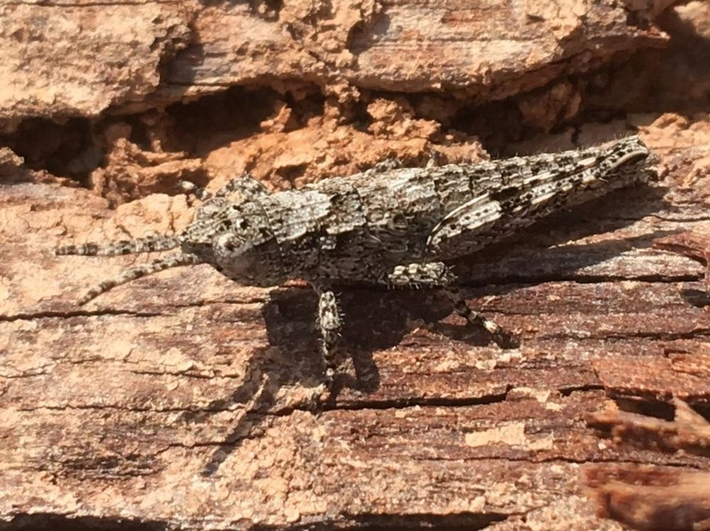 Hiding in plain site Insect Textured  Day No People Sunlight Nature Rough Rock Close-up