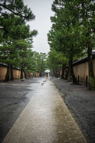Walking alone in the back alleys of Kyoto under pouring rains Tree Plant The Way Forward Direction Walking Rear View Nature Day One Person Road Real People Men Footpath Rain Rainy Season Tranquility Outdoors Puddle Moonsoon Umbrella White Umbrella Walking Alone... Japan Kyoto