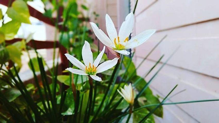 Kesar Plant Photography with Google Camera