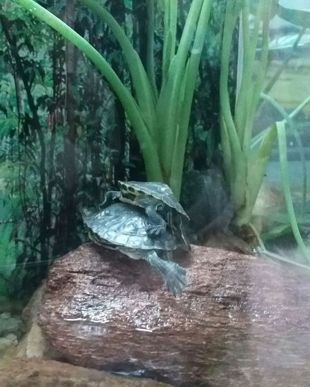 EyeEm New Here Tortoises Turtles Cagados Animal Themes Beauty In Nature Zoo Wild No People EyeEmNewHere
