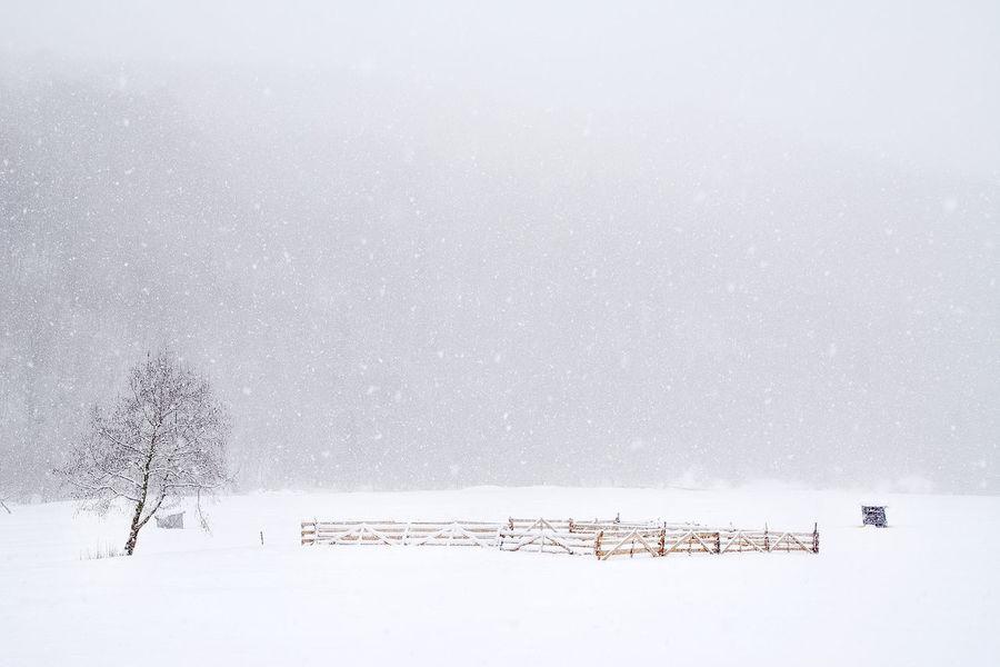 Nikon Carpathians Cold Landscape Mountain Romania Snow Travel Photography Traveling Village Winter Winter Trees Winter Wonderland Winter_collection Winterscapes Wintertime