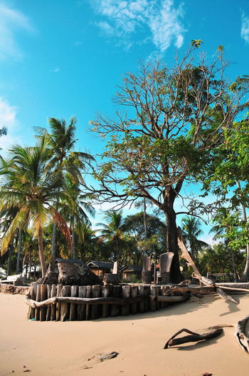 Destination Bintan  Treveling Tropical Paradise Tropical Climate Bintanisland INDONESIA Travel Destinations Illustration Tree Beach Sand Palm Tree Sea Sky Scenics Coconut Palm Tree Tropical Tree Beauty In Nature Idyllic