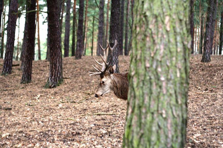 Camouflage. Deer Hiddenanimals WildparkSchorfheide EyeEm Natue Lover