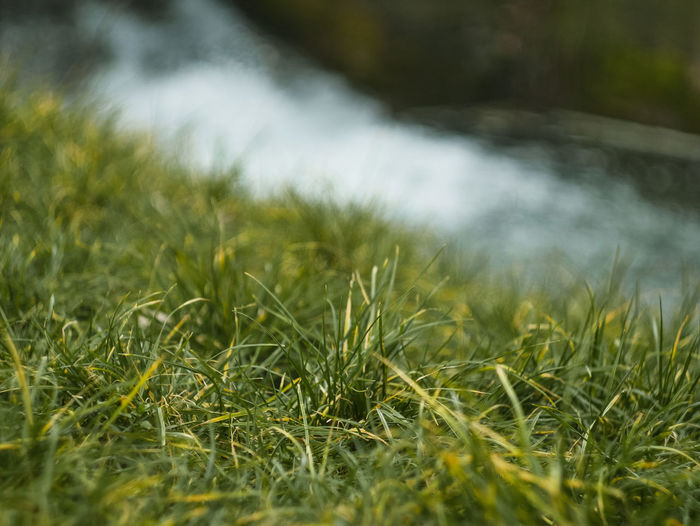 Plant Grass Green Color Selective Focus Growth Nature Land No People Beauty In Nature Day Field Close-up Tranquility Outdoors Freshness Environment Water Landscape Surface Level Blade Of Grass