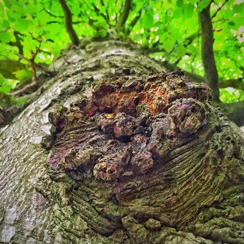 Wood ripple. TreePorn Tree Bark Treebark Nature On Your Doorstep Wood Years Shapes In Nature  Forrest Woodlands