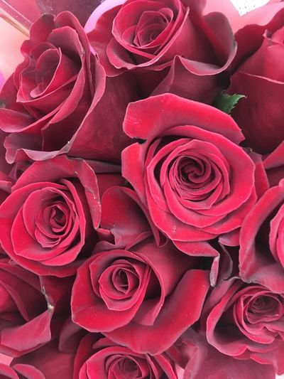 Roses roses Rosé Rose - Flower Plant Flower Beauty In Nature Flowering Plant Petal Close-up Red Flower Arrangement Nature Flower Head Freshness Full Frame Vulnerability  Fragility