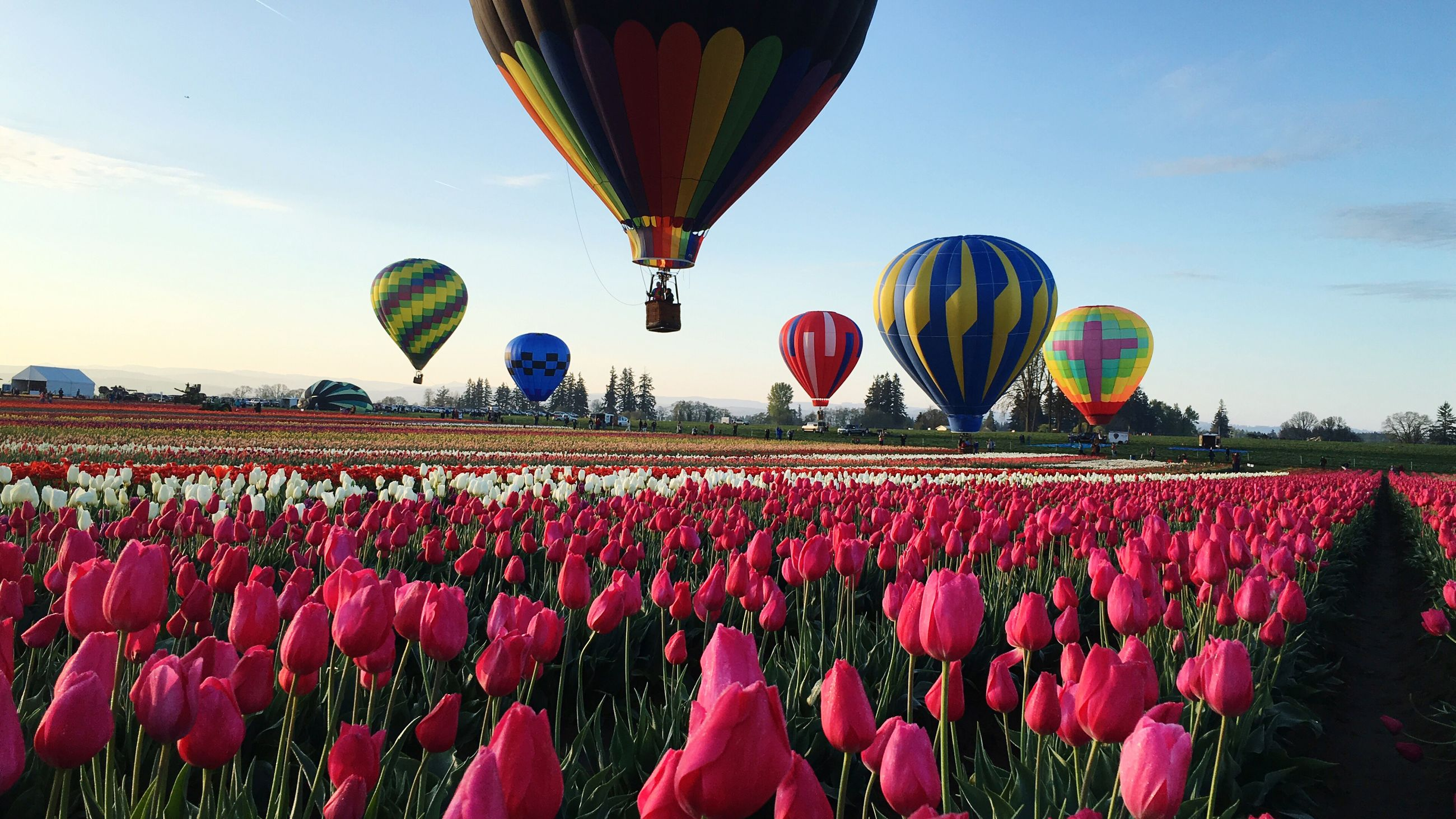 large group of people, sky, hot air balloon, flying, nature, celebration, outdoors, day, ballooning festival, crowd