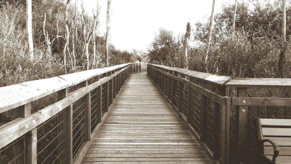 Breathing Space Evening Boardwalk Boardwalk Photography Boardwalk Nature Preservation Park Black & White Outdoors Built Structure Footbridge The Way Forward Walkwithme Walkways  Walkway Parks And Trails The Week On EyeEm Investing In Quality Of Life EyeEmNewHere Mix Yourself A Good Time