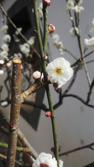 Nature Flower Focus On Foreground Close-up Branch Plant Growth Beauty In Nature No People Day Outdoors Tree Fragility Flower Head