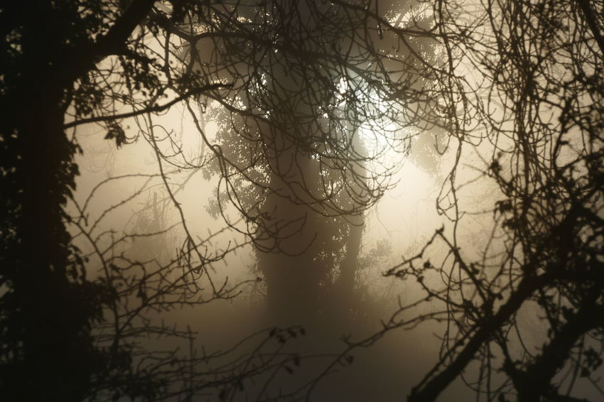 Foggy day.. Bare Tree Beauty In Nature Branch Day Dream States Ethereal Fog Foggy Foggy Weather Forest Low Angle View Nature No People Outdoors Scenics Silhouette Silhouette Silhouette_collection Sky Softness Tranquility Tree The Great Outdoors - 2017 EyeEm Awards Perspectives On Nature