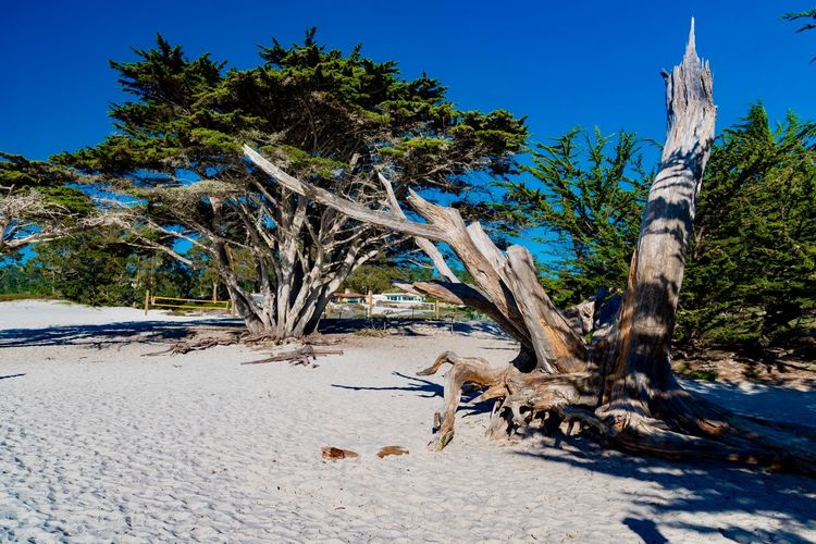 Tree Plant Land Sand Nature Water Scenics - Nature No People Tranquility Day Travel Destinations Trunk Tree Trunk Beach Tranquil Scene Environment Animal Sky Tropical Climate Outdoors Dead Plant Driftwood