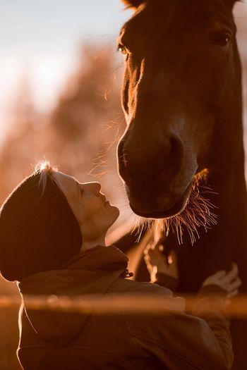 Side View Of Mid Adult Woman Stroking Horse While Standing Against Sky In Barn During Sunset