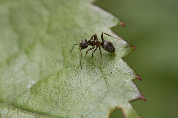 Close-Up Of Ant Crawling On Leaf
