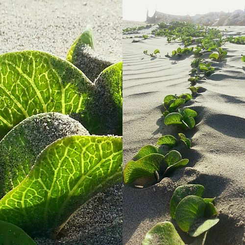 Planta De Mar Taking Photos Life Is A Beach Colombia ♥