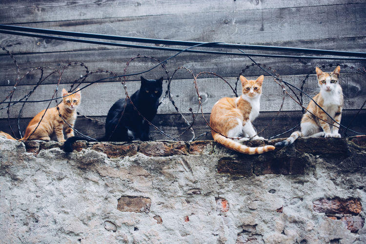High angle view of cats sitting