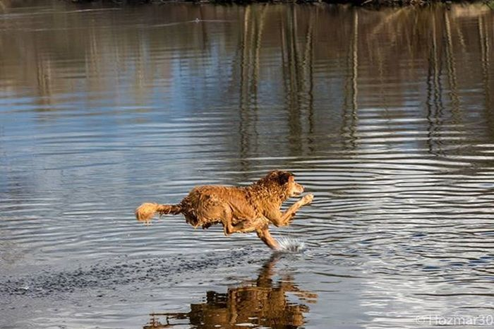 Dogsofinstagram Dogstagram Dog Leap Fetch Seattlecola