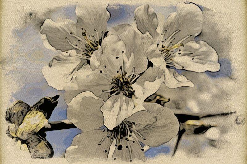 Cherry Blossom Jixipix Japanese  Woodcut Moku Hanga Flowers