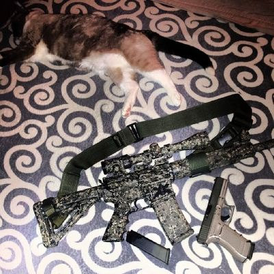 Hmmm...who has better camo..? The cat or the rifle..? AryaKitty WhatDoWeSayToDeath ? NotToday .! OlympicArms556mmMFR Oorah glock17gen4