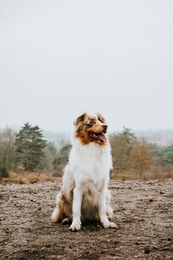 🐶 Dog Animal Themes Pets One Animal Domestic Animals Mammal Full Length No People Nature Day Tree Motion Outdoors Australianshepherd EyeEm Best Shots Nature EyeEm Nature Lover Eye4photography  Beautiful Nature_collection Sky Dogs The Week Of Eyeem Check This Out Focus On Foreground