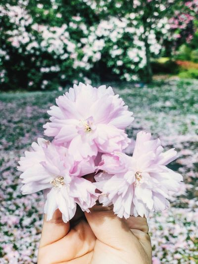 🌸 Flowers