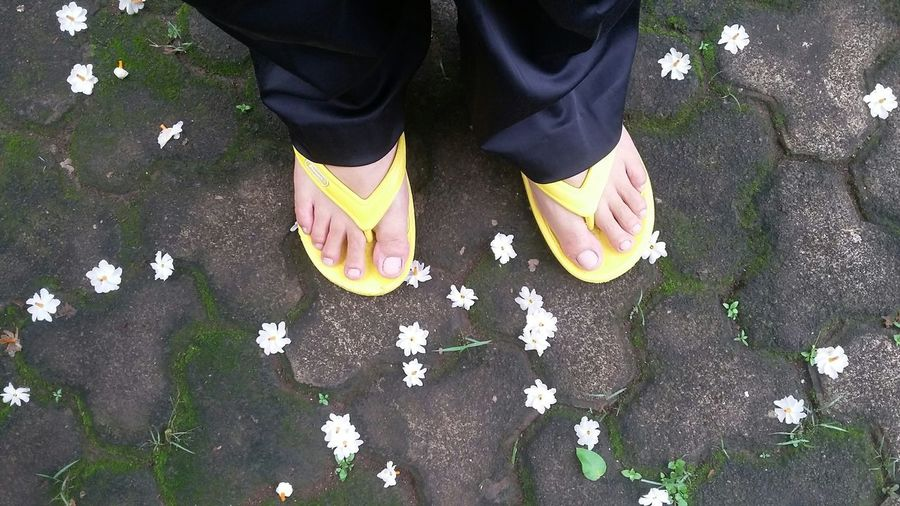 Low Section Of Person Legs On Footpath By White Flowers