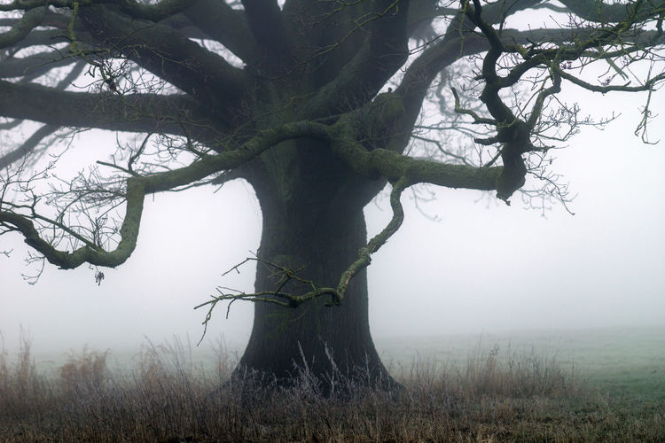 Tree in the fog on a meadow Beauty In Nature Day Field Fog Grass Landscape Nature No People Outdoors Tree Tree Trunk