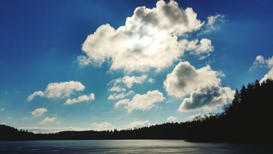 Calm Water Tree Blue Sky Cloud - Sky Cumulus Cloud Lake Lakeshore Lakeside Standing Water Calm Idyllic