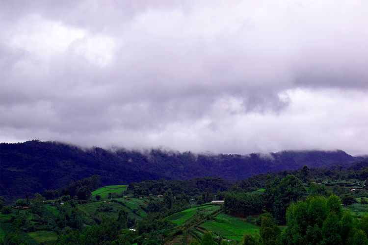 Ambience #Kenya, #Nature  #calm #clouds  #green #plantation #tea Beauty In Nature