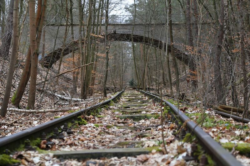 Tree Forest Land Plant Direction Nature Track The Way Forward No People Day Tree Trunk Railroad Track Trunk Tranquility Transportation Rail Transportation WoodLand Non-urban Scene Outdoors Diminishing Perspective