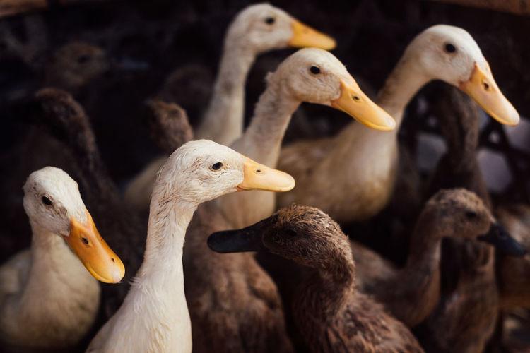 Close-up of ducks