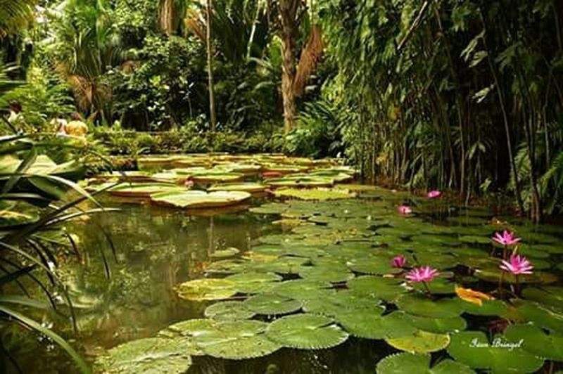 Museu Emilio Goeldi Paisagem Amazônica Belém Do Pará Emilio Goeldi Museum Waterlilies Floresdaamazonia Vitória-régia EyeEm Nature Lover Nature Photography