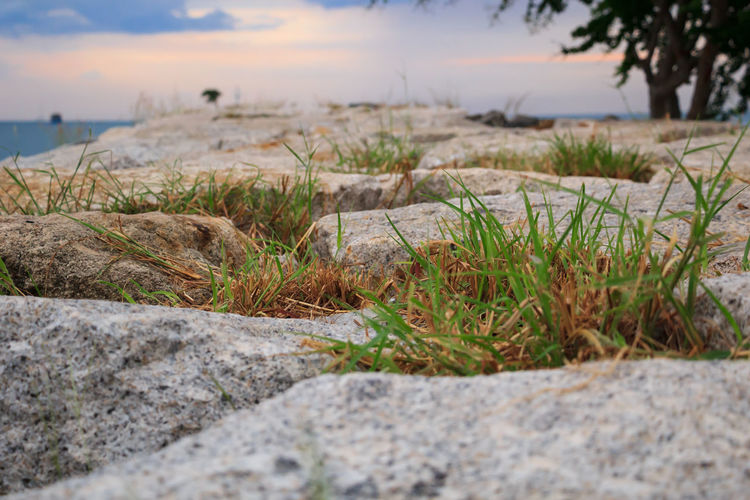 Close-up of grass by sea against sky