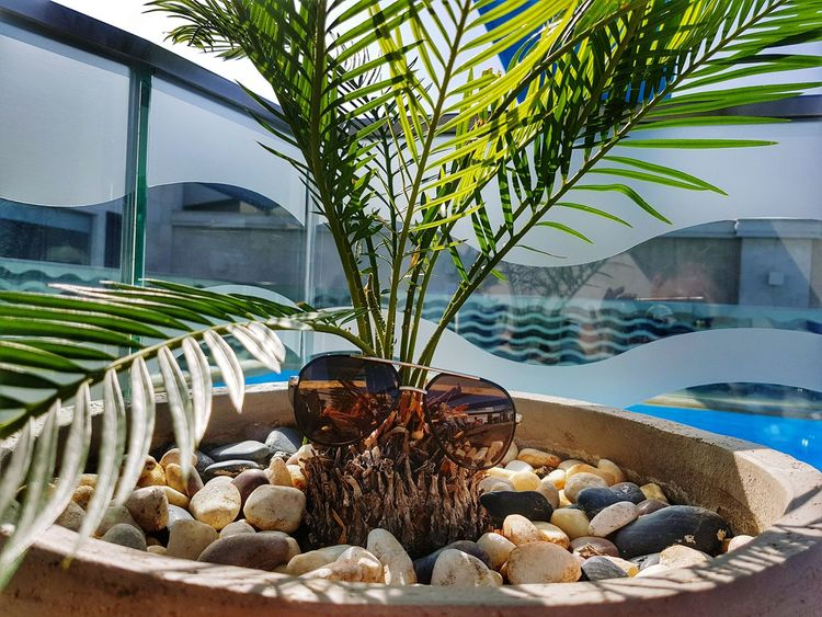 Palm Tree Vacations Tree No People Day Nature Water Healthy Eating Outdoors Sunglasses Funnyfaces Stones And Water Doha,Qatar