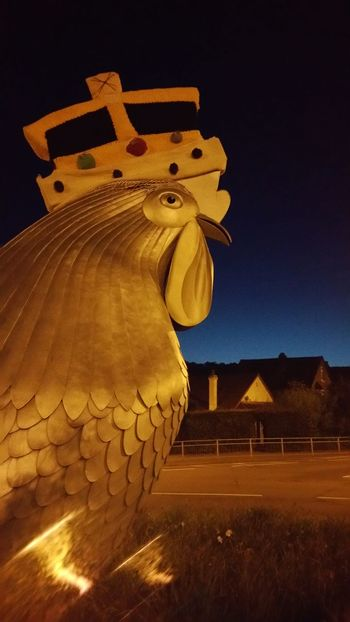 No Filters Or Effects Chicken 4am Before Dawn Roundabout Art Chicken Crown