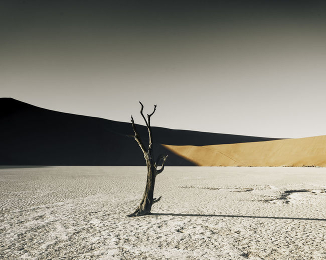 Sun blasted landscape of Doodvlei, Namibia. One trees sits vacantly in the vastness. Dead for over 900 years. Arid Climate Beauty In Nature Clear Sky Climate Copy Space Day Dead Plant Desert Environment Land Landscape Nature No People Non-urban Scene Outdoors Salt Flat Sand Sand Dune Scenics - Nature Sky Tranquil Scene Tranquility Tree