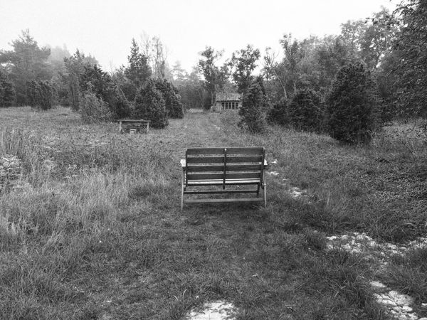 Bench Tree Empty Tranquility EyeEm Best Shots Sweden My Photography EyeEmBestPics Blackandwhite Photography Black & White Eye4photography  Solitude Clear Sky Grass Landscape Park Bench Growth Scenics Remote Nature Field Outdoors Day Grassy Beauty In Nature