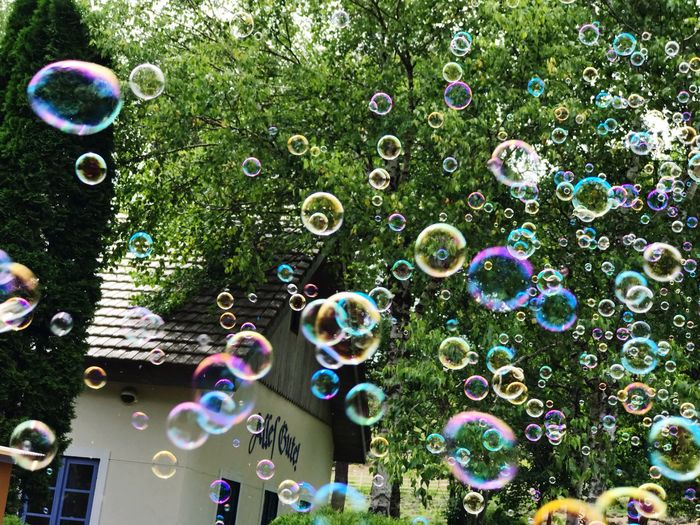 Close-up of bubbles against trees