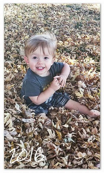 Falling into fall Autumn Looking At Camera Portrait Childhood Child Cute Blond Hair Smiling Leaf People One Person Outdoors Day Happiness One Boy Only Children Only Cheerful Boys Grass