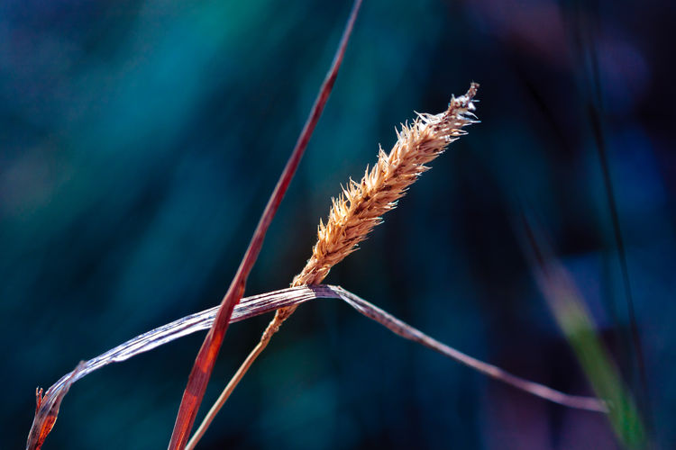Beauty In Nature Close-up Fall Colors Focus On Foreground Grass Macro Nature Outdoors Plant Selective Focus Tranquility