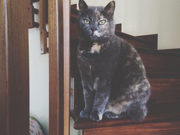 Cat Animals Eyes Stairs EyeEm Nature Lover EyeEm