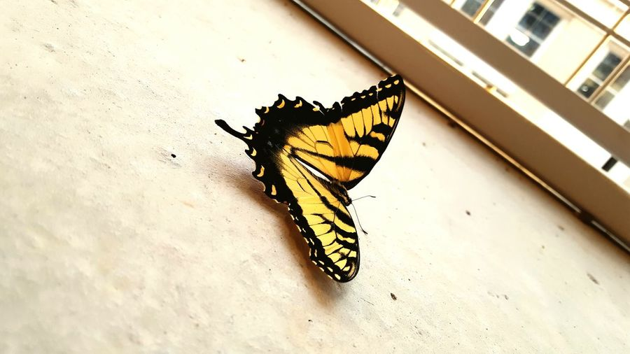 A pic of a beautiful butterfly I snagged in a parking garage. Butterfly Beautiful Beauty Nature Insect Bugs Android Forthelow Beauty In Nature Adventure Club