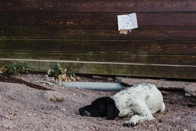 Dog sleeping on footpath