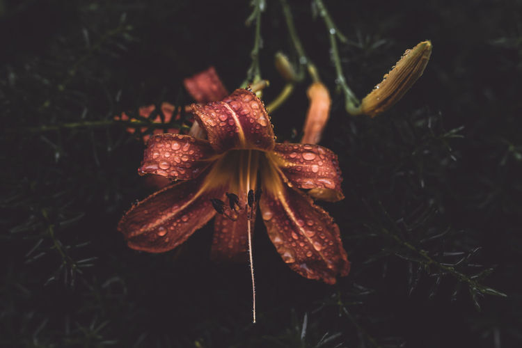 Close-up of wilted flower on field