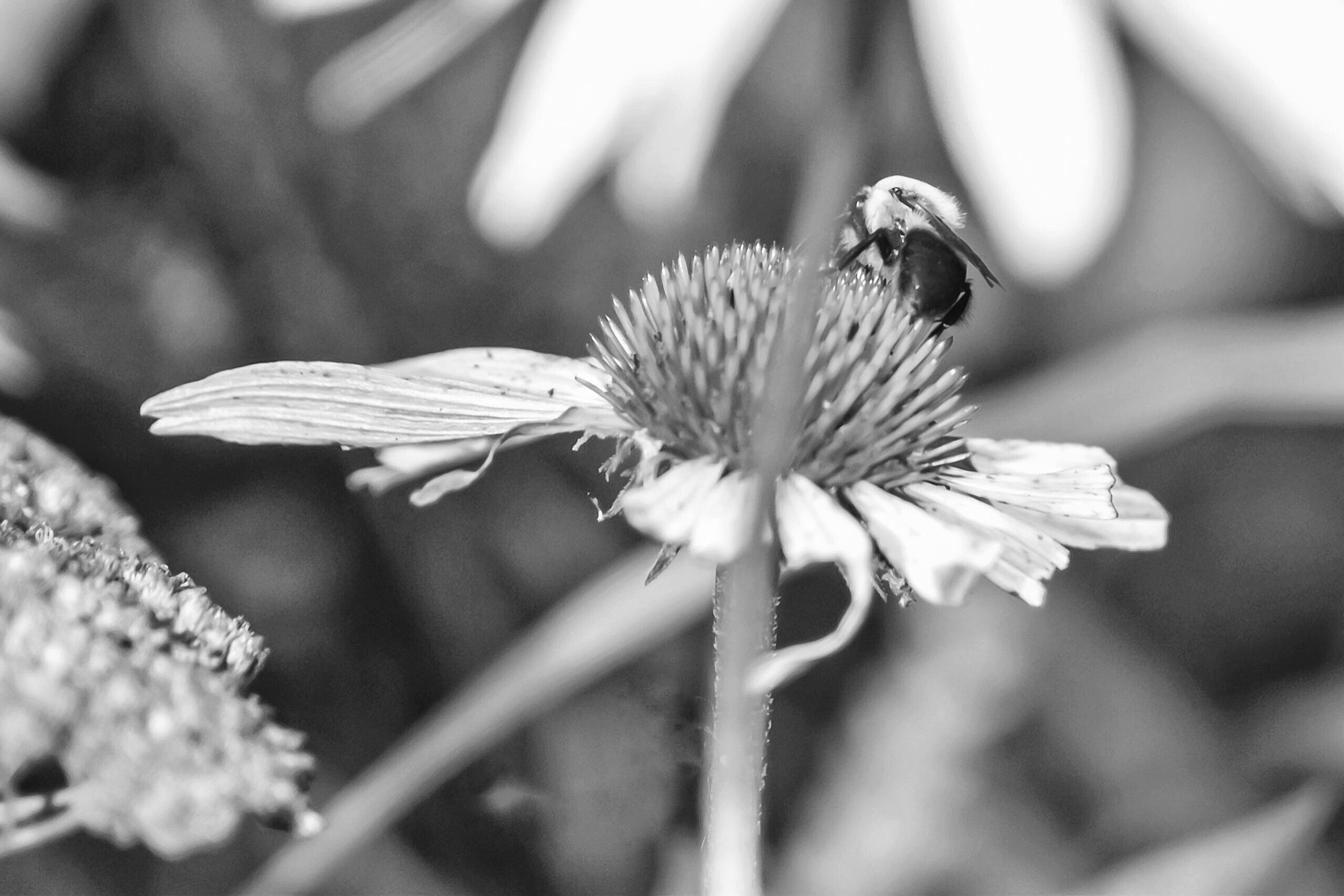 flower, fragility, growth, nature, petal, flower head, day, one animal, beauty in nature, plant, close-up, outdoors, insect, freshness, focus on foreground, no people, animals in the wild, animal themes, pollination, blooming