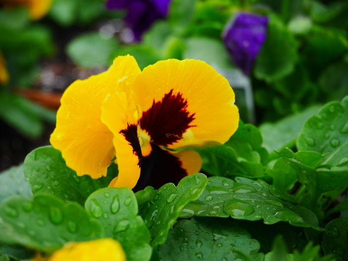 🌼 NYC New York Beautiful Earth Nofilter Flowers Panasonic  Lumixgx7 Allysdms Enjoying Life
