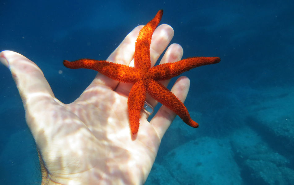 Seafish Water Nature Vacations Outdoors