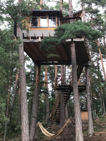 Treehouse Ekerö The Week on EyeEm Tree Plant Architecture Built Structure Growth Building Exterior No People Low Angle View House Green Color Outdoors Building Day Nature Wood - Material