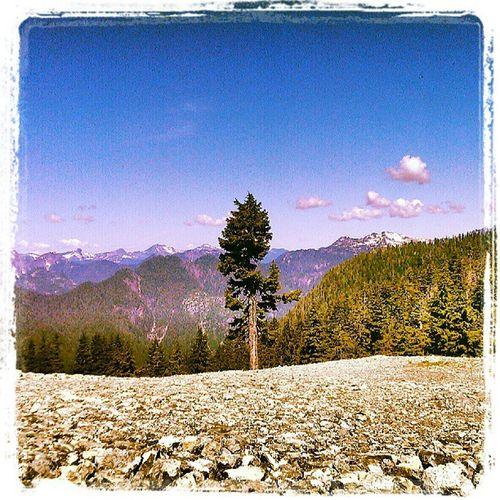 Mountseymour Beautifulbc Nature Badcamera Outdoorbc Outdoors Landscapes Vancouver Britishcolumbia Alone Strong Proud