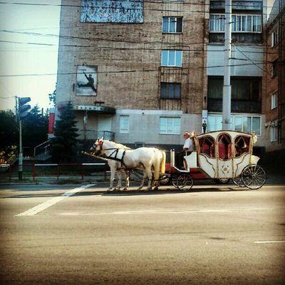 Карета на светофоре :) Винница Vinnitsa Vnua Funny PhotoOfTheDay